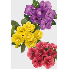 Калибрахоа Aloha Double Citric/Lavender/Pink Star (Контейнер КВ 10,5 или CLN 11)